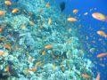 Elphinstone Reef Snorkelling
