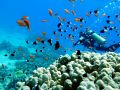 Centrum nurkowe Extra Divers Ras Nasrani