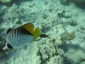 Schnorcheln Coral Beach Hurghada