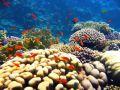 Reisetipp Tauchbasis Coraya Divers Marsa Alam