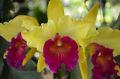 Bali Orchideen Garten Denpasar