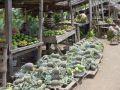 Reisetipp Westkamerun