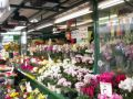 Blumenmarkt Bozen