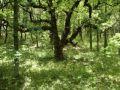 Wald Malabotta