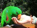 Parc des oiseaux de Kuranda