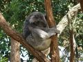 Conseil de voyage Zoo Wild Life de Sydney