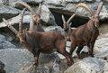 Conseil de voyage Zoo alpestre d'Innsbruck