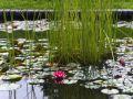 Reisetipp Botanischer Garten Breslau
