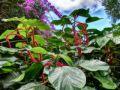 Jardin royal des épices Anse Royale Seychelles