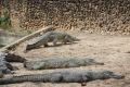Crocodile Farm: cose da fare
