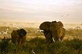 Atrakcja turystyczna Wycieczki z Przewodnikiem Kenya Expresso & Safari Nairobi