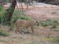 Safari Tours Lemodja