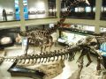 Things to do in Houston Museum of Natural Science