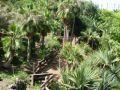 Reisetipp Jungle Park Las Águilas