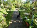 Gartencafé im Jardín Acuático Risco Bello