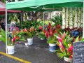 Things to do in Culture market Rarotonga