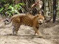 Zoo von Martinique