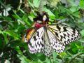 Reisetipp Butterfly Farm