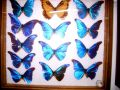 Things to do in Porlamar Butterfly Museum