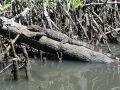 Reisetipp Guide Lucky Kalutara