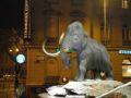 Centre commercial Mammut