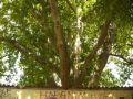 Reisetipp John Lennon Wall