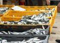 Fischmarkt Split