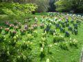 Botanischer Garten im Stadtpark Gütersloh