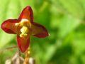 Botanischer Garten Marburg