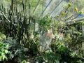 Jardin botanique de l'Université d'Erlangen-Nuremberg