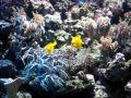Reisetipp Meeresaquarium
