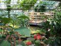 Reisetipp Botanischer Garten Potsdam