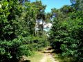 Things to do in Wernerwald Forest