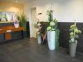Pflanzen Mauk Gartencenter