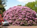 Reisetipp Rhododendron-Wald