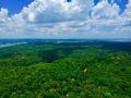 Jungle de Manaus