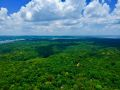 Conseil de voyage Jungle de Manaus