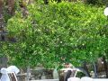 Reisetipp Restaurant Caesar's Mediterranean Cuisine
