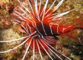 Things to do in Diving Phuket