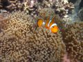Atrakcja turystyczna Snurkowanie Andaman Snorkel Discovery