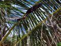 Reisetipp Insel Gaafaru