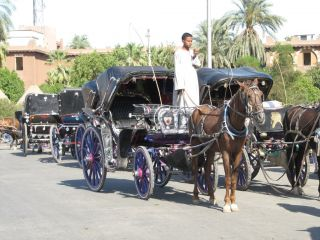 Reviews- Carriage ride in Luxor