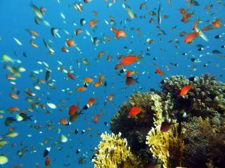Avis - House Reef Hôtel Lahami Bay