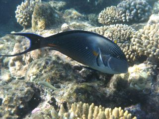 Reviews- Sataya reef snorkeling
