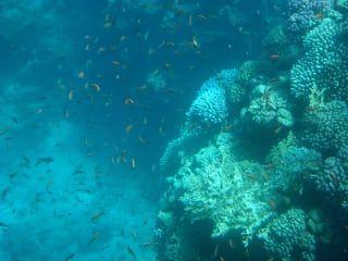 Reviews- Sharm el Sheikh Diving Center Wald