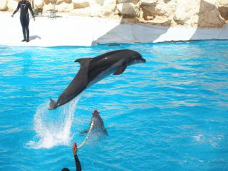 Reviews- Dolphinarium Sharm el Sheikh