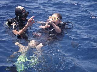 Go Sharm Tours - wycieczki w Sharm el Sheikh