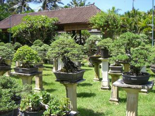 Reviews- Tropical Bonsai Nature Park (closed)