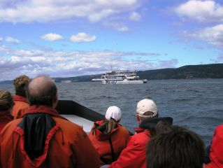 Reviews- Whale-Watching Tadoussac
