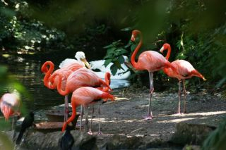 Reviews- Xaman Ha Bird Park